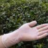 12寸PVC手套加长透明手套