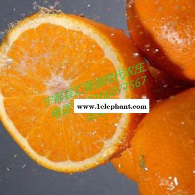 祛斑养颜橙子 新鲜赣南脐橙批发 20斤箱装实惠水果 九省包邮